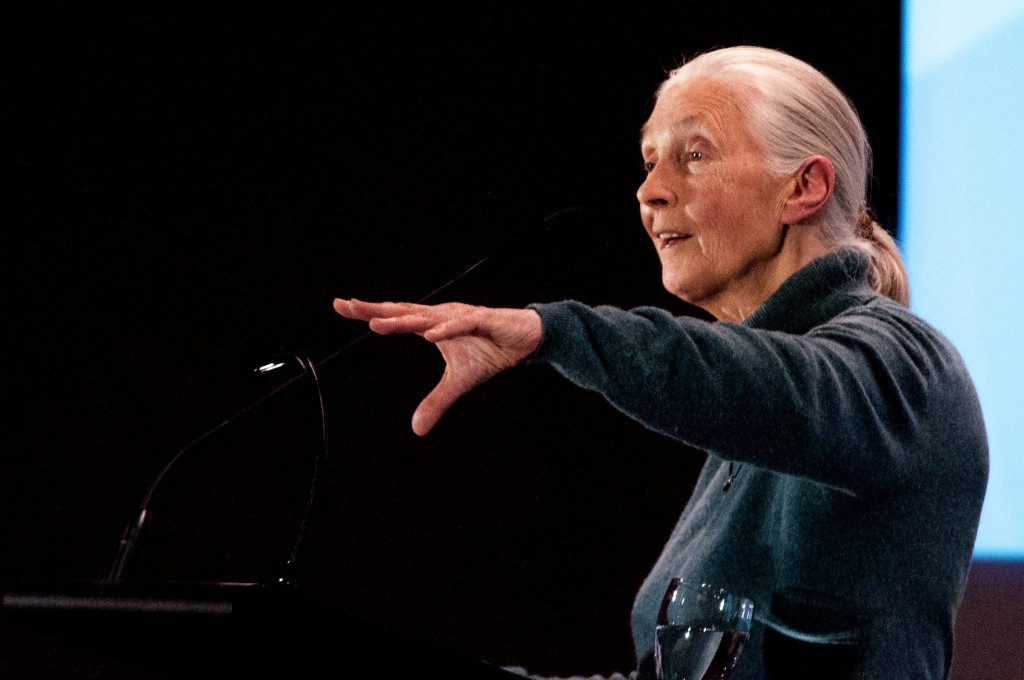 Jane Goodall spoke as part of TRUSU's Common Voices Lecture Series on March 24, 2014. Mark Hendricks/The Omega
