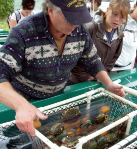 Abalone being lifted out of trays in the hatchery in Bamfield. (Louis Gosselin)