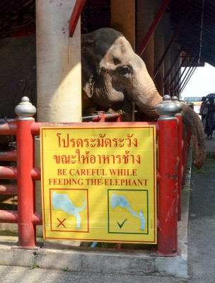 A sign at Nong Nooch Orchid Gardens and Cultural Park in Pattaya warns against feeding yourself to the elephants. (Marlys Klossner/The Omega)