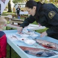 Department of Fisheries and Oceans officer shows a curious boy the anatomy of salmon. (Jared MacArthur)