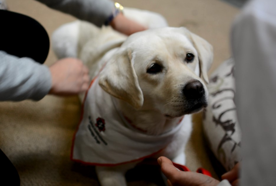 Bringing comfort: a day in the life of a therapy dog – The